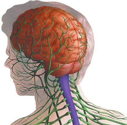 Wie ist das Nervensystem des menschlichen Körpers aufgebaut? -Anatomie
